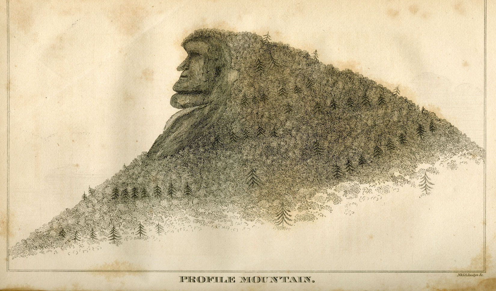 A black and white drawing of a mountain is seen. On the mountain are many trees, notably large pine trees. On the top of the mountain a face in profile, formed from rock, looks to the left. It is about a third the height of the mountain.